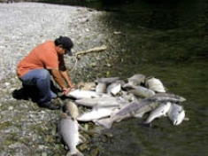 Dead Fish : docsity.com : Impact of Dams