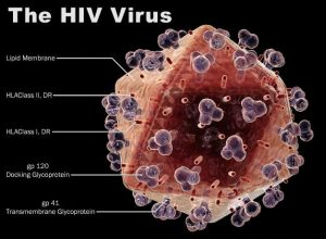 HIV Virus Attacks Bodys Defence Syndrome Resulting in AIDS