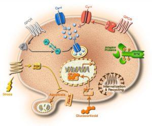 Cell Biology Basics Explained through GIFs