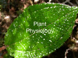 Plant Physiology related processes explained with the help of GIFs