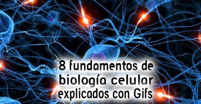 8 fundamentos de biología celular explicados con Gifs