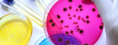 Microbiología: 18 cosas que el estudiante de biología tiene que saber