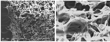 nanoingenieria de tejidos-nanomedicina-nanotecnología-docsity