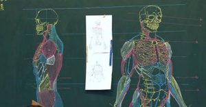 Aprendendo anatomia desenhando: dicas para estudantes de medicina
